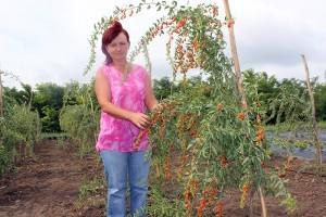 Elena Vetrici ne arată un arbust de goji