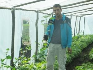 Victor Samoțchi, în sera unde creşte rasadul de paulownia