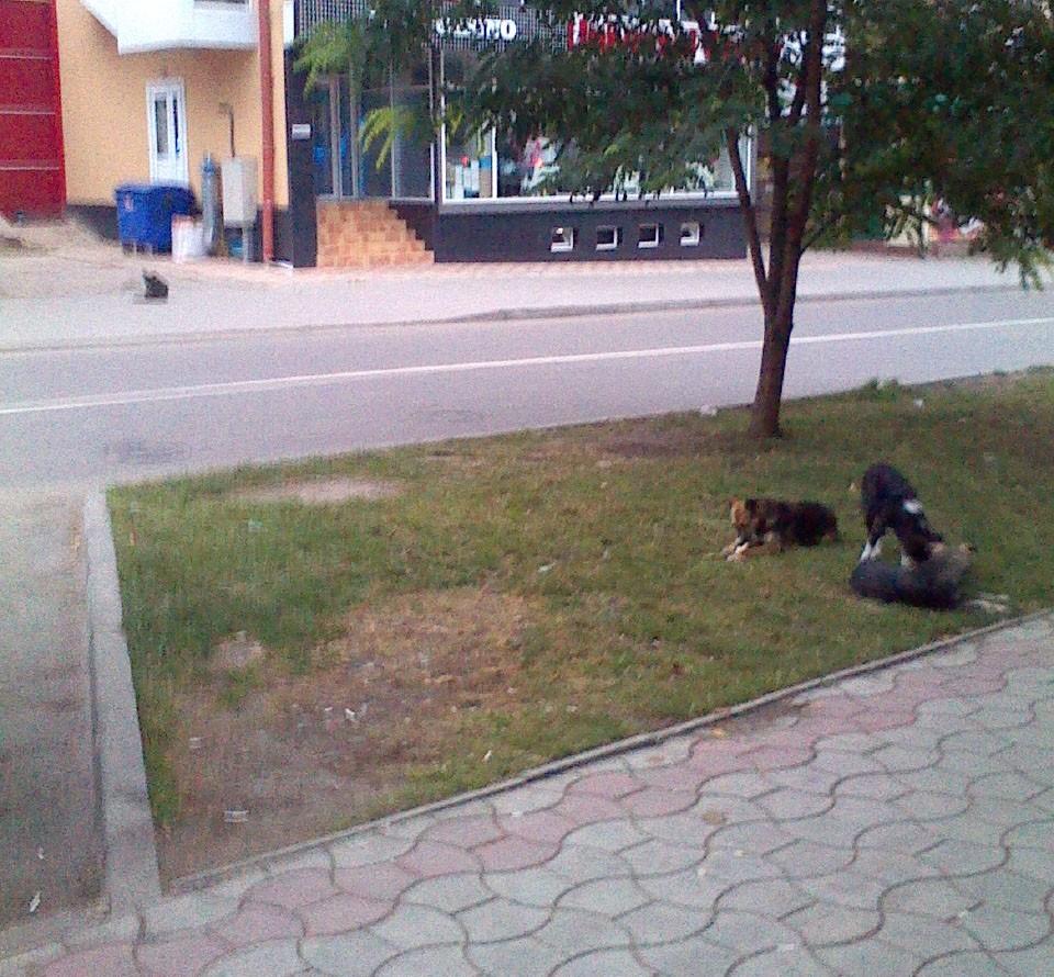 Câinii în centru orașului