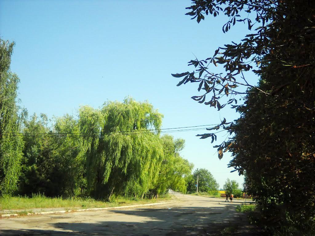 Drumul din Alexeevca