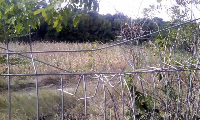 Gardul de plasă al stadionului